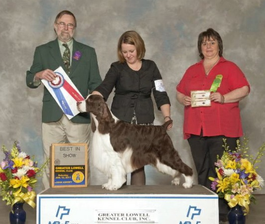English Springer Spaniel image: BIS BISS Ch Cerise Signature Of Telltale 'Dustin'