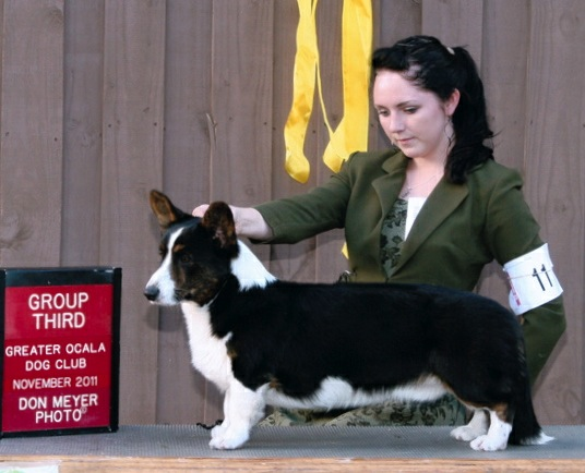 Cardigan Corgi image: Sunkissed Keepsake