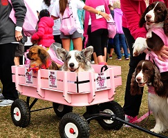 Wag For Awareness Breast Cancer Walk